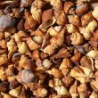 Brown and Spital Sea Shells Background — Stock Photo