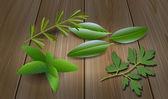 Herbs ( Laurel , Rosemary,Mint, Parsley ) — Stock Vector