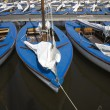Many blue sailing boats in the marina - Stock Photo