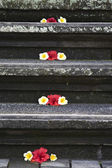 Balinese stairs decorated with kamboja flowers — Stock Photo