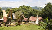 Toraja village with traditional houses — Stock Photo