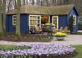 Holandská květinářství — Stock fotografie