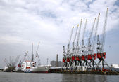 Cranes and carriers in the Port of Rotterdam — Stock Photo