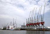 Grues et transporteurs dans le port de rotterdam — Photo