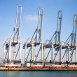 Harbor cranes at the Port of Rotterdam — Stock Photo