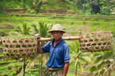 Rice farmer Wajan Kantun on his rice fields in Tegallalang — Stock Photo