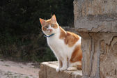 рыжая кошка на стене — Стоковое фото