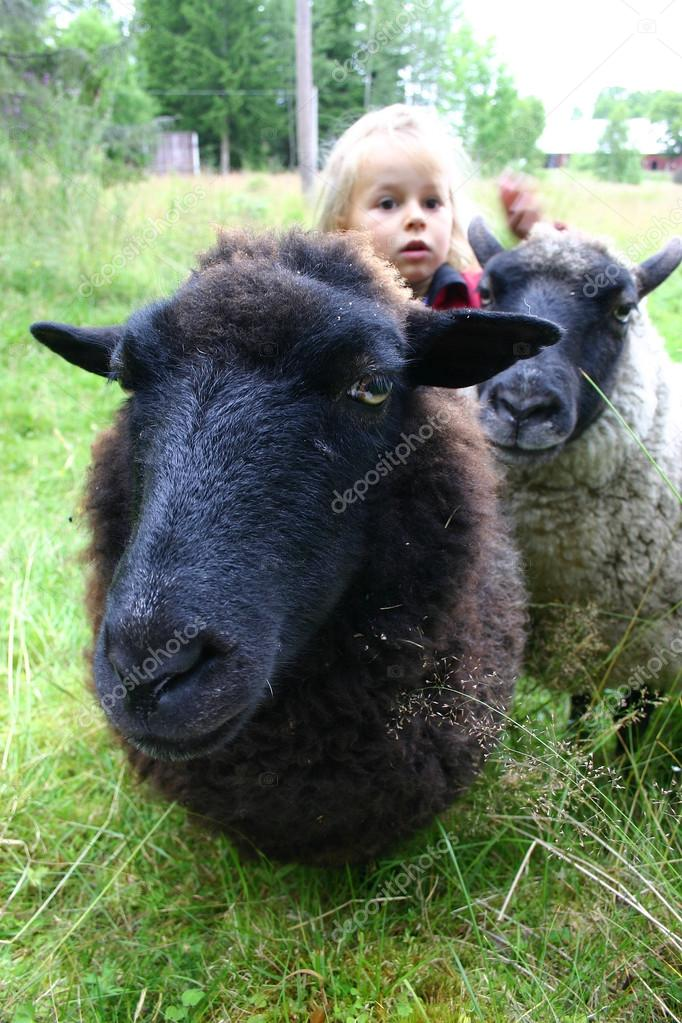 Two sheep on a cold summer day in Sweden, standing in a meadow with a small four year old girl — Stock Photo #19015671