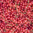 Closeup of a cluster of redcurrants — Stock Photo