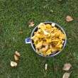 Newly picked yellow chantarelles — Stock Photo