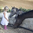 Stock Photo: Child with horses