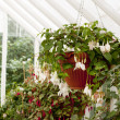 Greenhouse flowers — Foto Stock