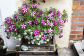 Flowerbed outside next to stairs — Stock Photo