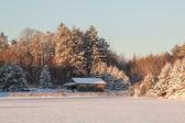 Dům v lese — Stock fotografie