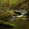 Stock Photo: Torrent in forest