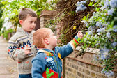 Two little boys picking flowers — Stock Photo