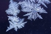 Window Frost — Stock Photo
