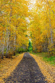 Autumn forest, road, tree stumps, yellow leaves — Stock Photo
