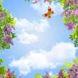 Stock Photo: Flowers, sky and butterflies frame