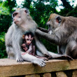 Monkey family with two adults and one baby — Stock Photo
