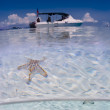 Stock Photo: Scubdiving boat on surface with seastar on seabed