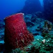 Barrelsponge on the reef at Tokong Laut, Perhentian Islands, Malaysia — Stock Photo