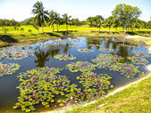 Description:Beautiful lake in the middle of a scenic golf course near Pattaya, Chonburi on December 28, 2010. — Stock Photo
