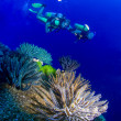Close up of soft corals with two scuba divers swimming in background — Stock Photo