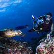 Stock Photo: Scubdiver photographing swimming turtle on reef
