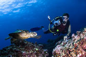 Scuba diver photographing a swimming turtle on a reef — Stock Photo