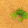 Green plant growing in dry hay - conceptual photo for unexpected growth in adverse conditions with copy space — Stock Photo