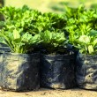 Stock Photo: Green seedlings growing in soil