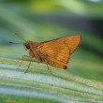 Orange Butterfly — Stock Photo #19018017