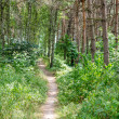Footpath in summer forest — Stock Photo