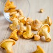 Fresh chanterelles — Stock Photo