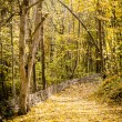 Path in autumn forest — Stock Photo #34403497