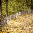 Path in autumn forest — Stock Photo #34403531
