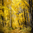 Path in autumn forest — Stock Photo
