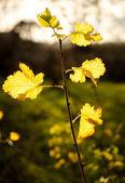 Bush branch with foliage on autumn — Stock Photo