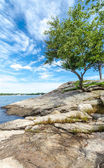 Tree on the coast of Connecticut — Stock Photo