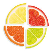 Lemon, lime, grapefruit and orange on white background — Stock Vector