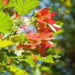 Branch with green and red leaves — Stock Photo