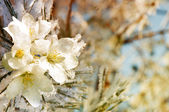 Flowers on the tree covered with ice — Stock Photo