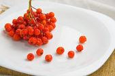 Rowan berry lies on a white plate — Stock Photo