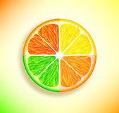 Lemon, orange, lime and grapefruit — Stockfoto