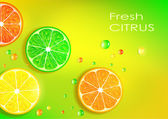 Orange, lemon, lime and grapefruit — Stock Vector