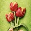 Red tulips — Stock Photo