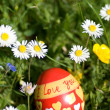 Red easter egg lying in springflower covered meadow — Stock Photo #23818727
