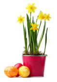 Yellow daffodils with easter eggs — Stock Photo