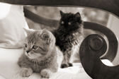 Two kittens on a chair — Stock Photo